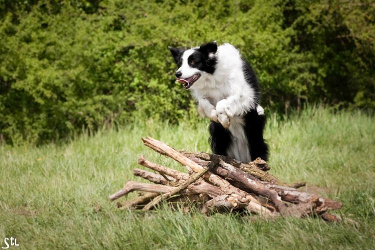 chien en action